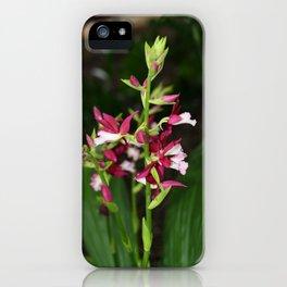 Nun's Orchid iPhone Case