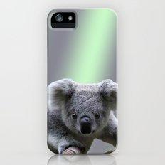 Koala Bear iPhone (5, 5s) Slim Case