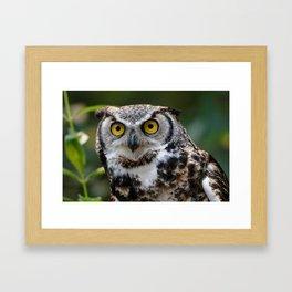 Great Horned Owl | Owls | Wildlife Photography Framed Art Print