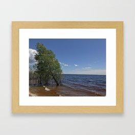 Tree in the lake Framed Art Print