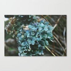 Winter Hydrangea Canvas Print