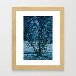 Blue Winter  Framed Art Print