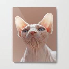 Sphinx Cat Metal Print