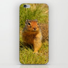 Twitchy Nosed Columbian Ground Squirrel iPhone Skin