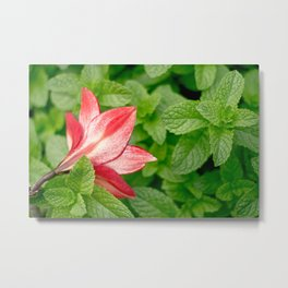 Lily and Mint Metal Print