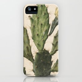 Herman Saftleven - Blooming prickly pear cactus (1683) iPhone Case