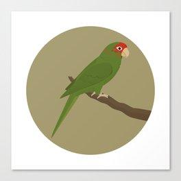 Mitred Parakeet Canvas Print