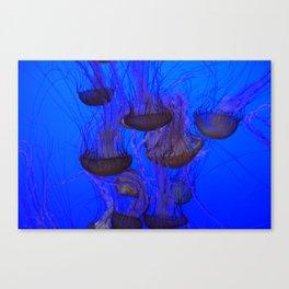 Jelly School Canvas Print