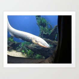 Electric Eel 2 Art Print