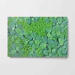 Water plants Metal Print