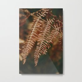 The perfection of fern's leaves Metal Print