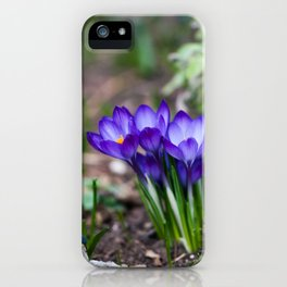 Purple Crocus Blooms iPhone Case