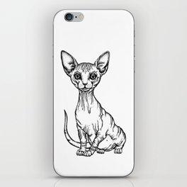 Sphynx Kitten iPhone Skin
