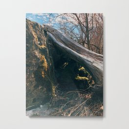 Fall tree in the sunset Metal Print