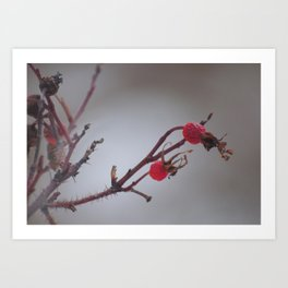 Rosehips in Winter Art Print