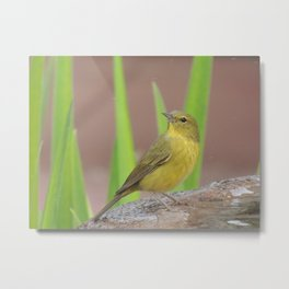 Yellow Warbler at the Fountain Metal Print