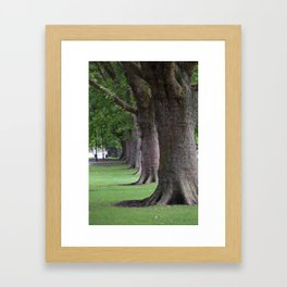 Cambridge tree 1 Framed Art Print