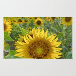 Sunflower. Summer dreams Rug