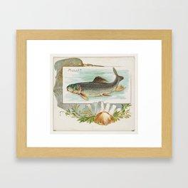 Vintage Atlantic Mullet Fish (1889) Framed Art Print