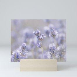 Sweet Lavender Mini Art Print