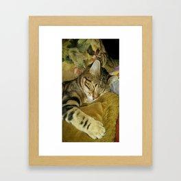 Zelda The Cat Framed Art Print