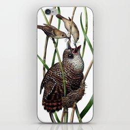 Baby Bird I iPhone Skin