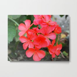 Red blossom pattern Metal Print