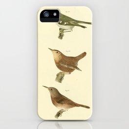 043 Golden crested Kinglet (Regulus satrapa) Winter Wren (Troglodytes hyemalis) House Wren (Troglodytes sedon)13 iPhone Case
