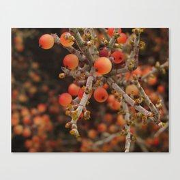 Joshua Tree Desert Mistletoe RMD Designs Canvas Print