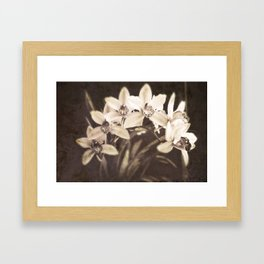 Boldness Framed Art Print