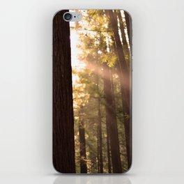 Sunbeams Through Redwoods - San Francisco, California iPhone Skin
