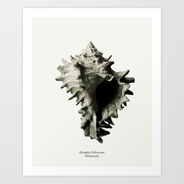fossils nature Art Print
