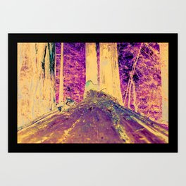 Muir Woods Logs Art Print