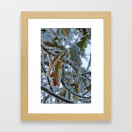 Frosty Leaf Framed Art Print