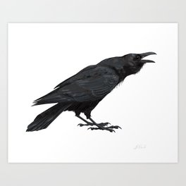 Common Raven Art Print