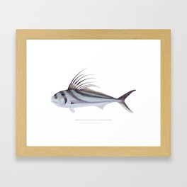 Rooster Fish Framed Art Print
