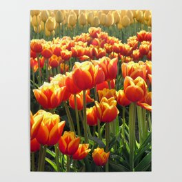 Tulips Are Better Than One Poster