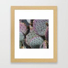 Cactus Whiskers Framed Art Print