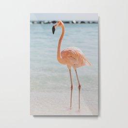 flamingo ii / aruba Metal Print