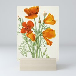 California Poppy Vintage Botanical Print, Mary Vaux Walcott Mini Art Print