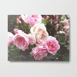 Roses II Metal Print