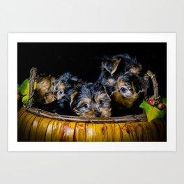 Halloween Pumpkin Basket Filled with Five Yorkshire Terrier Puppies Art Print