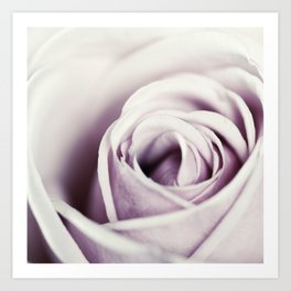 Close-up view of beatiful pink rose Art Print