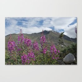 Fireweed View Canvas Print