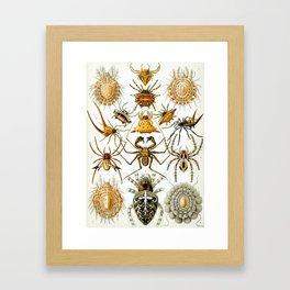 Ernst Haeckel Kunstformen der Natur Arachnida Plate, Spiders Framed Art Print