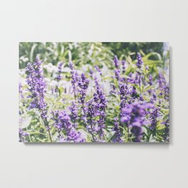 Purple Haze, III Metal Print