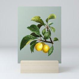 Vintage Ripe Plums on a Branch Botanical Illustration on Mint Green Mini Art Print