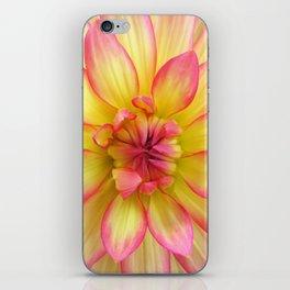 Pink and Yellow Dahlia Flower / Nature Macro Photography iPhone Skin