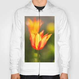 Red and yellow tulip Hoody