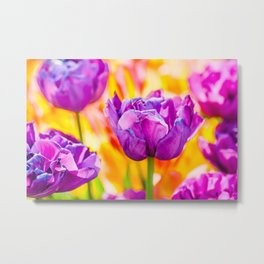 Tulips Enchanting 06 Metal Print